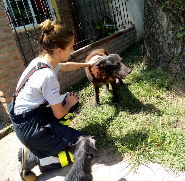 Perro rescatado Embalse 01