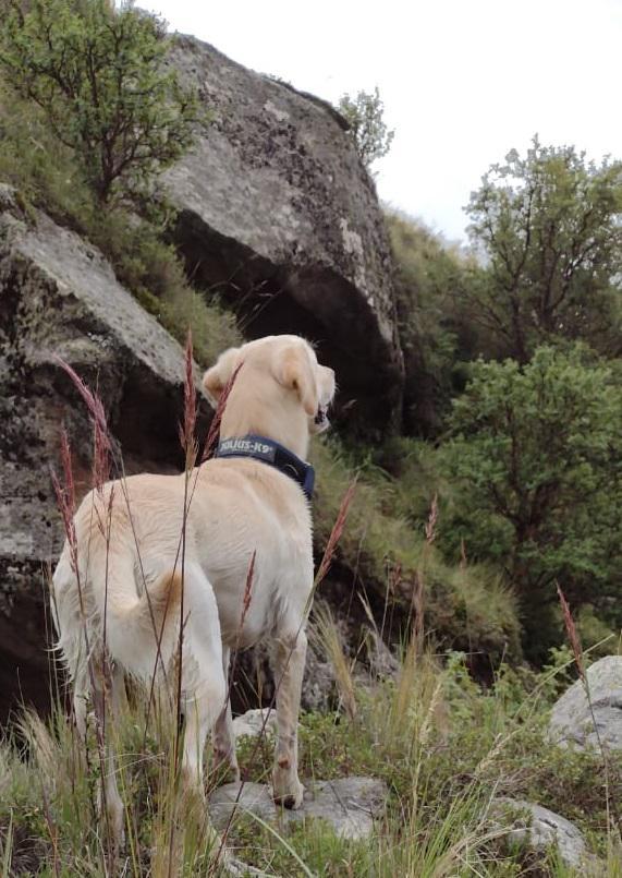 Perro de búsqueda en el Cerro Champaquí 08