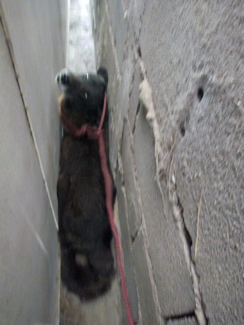Perro rescatado Embalse 02